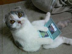Gato viciado :)