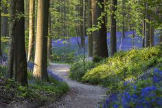hallerbos 3 by Guy Lambrechts on 500px