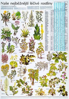 Botanical Illustration, Amazing Nature, Botany, Projects For Kids, Life Is Good, Activities For Kids, Flower Arrangements, Bonsai, Herbs