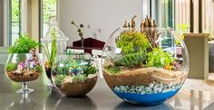 Terrariums are great! They're adorable little glass gardens that take little work to care for. They're also very hip right now and add that extra something to any space that might need a little brightening up.
