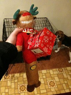 Rula got a present from the folks at doggy daycare. Dog Training Classes, Pet Store, Your Dog, Christmas Sweaters, Folk, Presents, Pets, Gifts, Christmas Jumper Dress