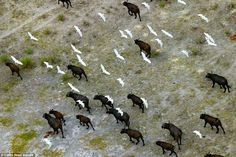Michael Poliza has taken images of wildlife from above all over Africa. In this…
