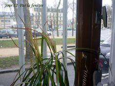12.02.2016 de ma fenêtre : Jour gris et rue déserte... Rue, Flow, Plants, Plant, Planets
