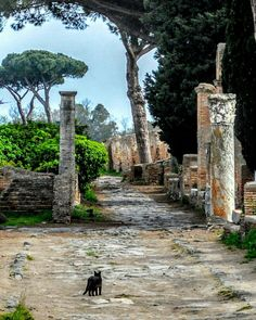 """Keeping Watch"" #photobydperry ##wp #noidiroma #repostromanticitaly #italy #italia #loves_venezia #myrome #lazio #incredible_italy #awesome_earthpix #Italia_super_pics #ig_italy #ig_padova #loves_united_hdr #ostia #ostiaantica #sanantoniodepadua #ig_venezia #loves_united_hdr #loves_veneto #verso_venezia #loves_super_pics #italia_super_pics #loves_united_venice #loves_padova #loves_street #fb #ancientarchitecture #scavi"