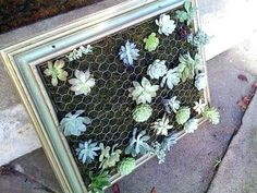 How To: Framed Vertical Succulent Garden ou comment embarquer mes plantes grasses ? Succulent Frame, Vertical Succulent Gardens, Hanging Succulents, Succulent Gardening, Cacti And Succulents, Pallet Gardening, Vertical Planter, Urban Gardening, Indoor Gardening