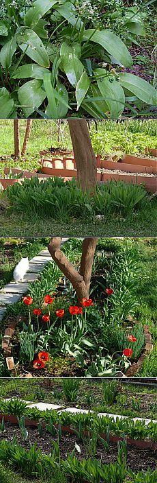 Лук медвежий для первых весенних салатов.Для того чтобы получить раннюю витаминную зелень для первых салатов, посейте сейчас в горшок семена лука медвежьего и поставьте на подоконник южного окна. После того как используете молодые зеленые листья лука, растение высадите на даче в открытый грунт, найдя ему тенистый уголок со влажной, в меру плодородной почвой.С лечебной целью используют стебли с листьями и луковицы, обладающие кровоочистительным, бактерицидным, фунгицидным, болеутоляющим.