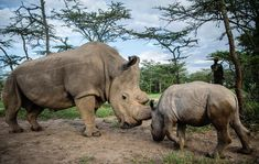 """(@jamessuter) """"Yesterday the world lost the last male northern white rhino on earth - Sudan. We are so saddened…"""""""