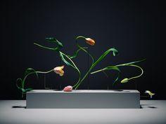 Carl Kleiner est un artiste photographe qui excelle dans la composition et la…