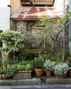 Urban Garden Design Cat Alley — The Design Files Garden Cottage, Garden Pots, Potted Garden, Balcony Gardening, Fairy Gardening, Rustic Gardens, Outdoor Gardens, The Design Files, Garden Spaces