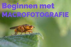 Wat is Macrofotografie - Moor Fotografie Photography For Beginners, Close Up, Animals, Fotografia, Pictures, Photography, Animales, Animaux, Animal