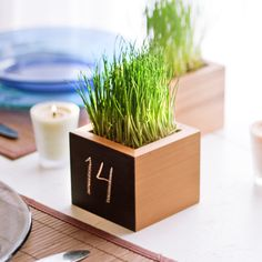 Wheatgrass makes a lovely and bright AND edible arrangement. Minimalist style with clean edges and a nice blackboard paint finish on one side for use as table number markers for guest seating. Fits a standard wheatgrass pint container neatly when transplanted.