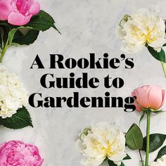 A rookie's guide to gardening