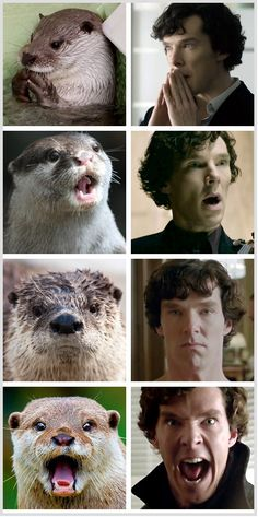 These Otters Look Like Benedict Cumberbatch (thanks, Stacey Ewing!)