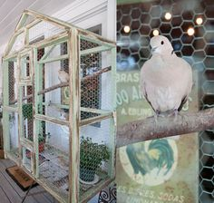 Awesome outdoor aviary... I've always wanted one. Funny thing: I used to have two ring-necked doves like this one here.