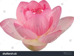 Low Poly illustration of a lotus flower Low Poly, Lotus Flower, Create Yourself, Royalty Free Stock Photos, Illustration, Artist, Flowers, Plants, Pictures