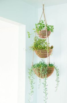 Awesome 40+ Hanging Plant Ideas https://pinarchitecture.com/40-hanging-plant-ideas/