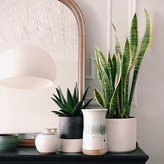 Green plants and ceramic pots by Manhattan-Nest.