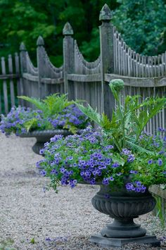 Picket fence.  Forget the fence!  I like the pots and plants!