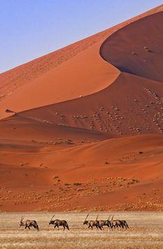 Life in the desert ~ Oryx, Namib-Naukluft National Park, Namibia.  Photo: Konstantinos Arvanitopoulos, via 500px