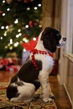 Is Santa here?