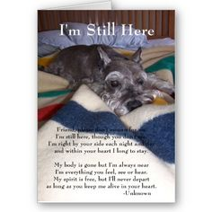 Ranked as one of the most popular dog breeds in the world, the Miniature Schnauzer is a cute little square faced furry coat. Schnauzer Mix, Miniature Schnauzer, Schnauzers, Dog Love, Puppy Love, Pet Loss Grief, Pet Sympathy Cards, Greeting Cards, Dog Quotes