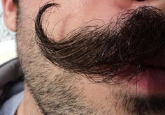 Perfect Curl in Moustache Handlebar Mustache, Beard No Mustache, Mustache Grooming, Moustaches, Hair And Beard Styles, Hair Styles, Mustache Styles, Dragon Age, Facial Hair