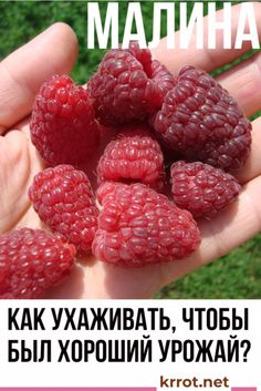 Smart Garden, Home And Garden, Diet And Nutrition, Homesteading, Garden Design, Raspberry, Berries, Plants, Gardening