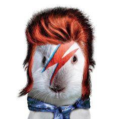 david bowie-conejo