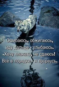 Positive Quotes, Motivational Quotes, Inspirational Quotes, Russian Humor, Funny Memes, Jokes, L Love You, Animal Facts, New Life