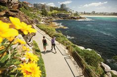 Bondi to Coogee Coastal Walk: if the weather is good