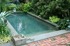 Plunge Pool Cost pools have constructed the uk s most televised pool channel 4 s big Diy backyard splash pad Outdoor furniture Design an. Small Backyard Pools, Backyard Pool Landscaping, Natural Swimming Pools, Small Pools, Outdoor Pool, Swimming Ponds, Big Pools, Landscaping Ideas, Indoor Outdoor