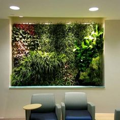 Green Living Technologies International's utilize the green wall systems and green wall plants that make its green walls the leading choice of architects. Living Green Roof, Green, Living Roofs, Green Roof, Garden Wall, Wall, Green Living, Living Green Walls, Wall Gallery