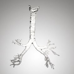 Farlow's Scientific Glassblowing. This model includes the trachea and the detailed branches of the bronchial tree. The bronchial rings were added using the measurements from a cadaver casting to make the model look and feel anatomical.  Photo: Garry McLeod  http://www.farlowsci.com/index.html