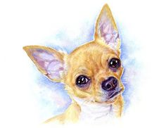 artav Chihuahua 03 ACEO Art Print From Watercolor Painting