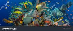 Coral And Fish In The Red Sea.Egypt Стоковые фотографии 200070209 : Shutterstock