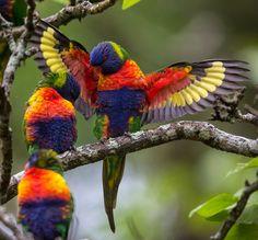 Színes madarak...