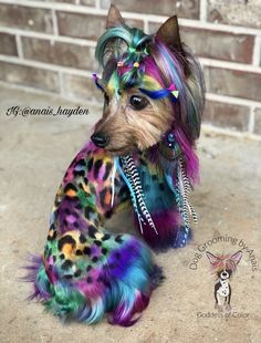 Dog Grooming, Yorkie, Rainbow, Colorful, Dogs, Character, Design, Art, Style