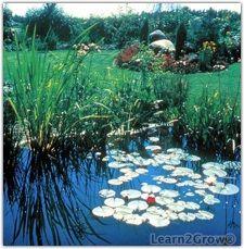 Spring-Cleaning Your Garden Pond  http://www.learn2grow.com/gardeningguides/specialtygardening/watergardening/SpringCleanPond.aspx