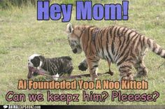 Mom! Can we keep the new kitty?