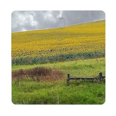 Sunflower Farm, wooden fence & phone pole Puzzle Coaster