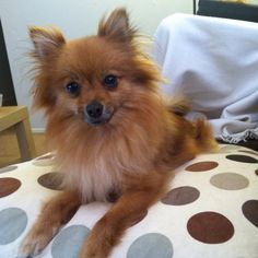 this will be my dog!! maybe more black or blonde...