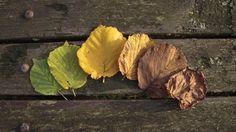 2880x1620 High Quality leaf