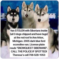 "UPDATE:  All three Stolen Huskies are home.   STOLEN #SiberianHusky F Spotted 3-8-15 in #AnnArbor #MI Meet at 5 mile/Fenkell & Wyoming to search FIND THERESA'S DOGS   STOLEN BLUE VAN #Lostdog ""Mandy"" #Detroit #MI #AnnArbor #SiberianHusky F Three Huskies stolen, two have been found THERESA 1-708-528-1053 https://www.facebook.com/HHSHR/posts/10153124546609253"