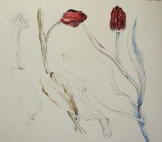 Tulip-Chisako Fukuyama,  Pencil drawing,Watercolor,  http://chisako-fukuyama.jimdo.com/works/water-color/