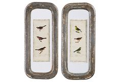 Aviary Wall Plaques
