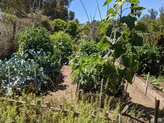 Natural Lifestyle, Lush Green, Sunday Morning, Hulk, Vegetable Garden, Tomatoes, Acre, Planes, Home And Garden