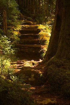 """""""Hidden Forest Path by Camperman"""""""