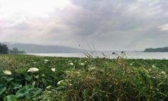 Il lago di Monate.  #lagomonate #ternate #instagramers #instagood #instadaily #picoftheday #bioebio #biologonutrizionista  #vagabonda #varesenews #instavarese #igersvarese #ig_varese  #sundayfunday #sunday #mangiabevibici