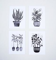 House Plants Pack Set of four (4). Aloe Vera, Pilea peperomioides , Japanese Peace Lily, Avocado Tree. Monochrome Block Prints Wall Art. A5.