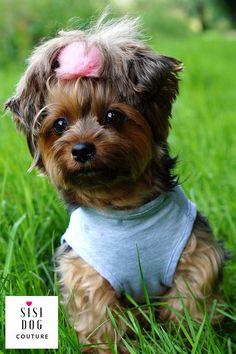 https://flic.kr/p/WFoqib | l, sisi dog couture, bluza dla psa, pet clothing, pet supplies, dog hoodie, cothes for dog, ubranko dla psa | x-default
